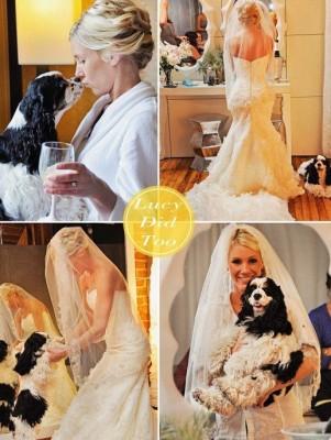 Wedding Day! Cocker Spaniel
